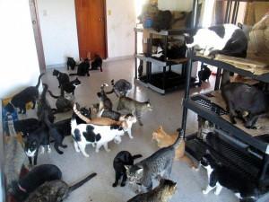Los perros y gatos de la Gatera Doña Felisa esperan la ayuda de quienes deseen contribuir para su manutención.  - Suministrada /GENTE DE CAÑAVERAL