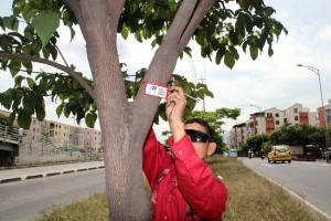 El ciudadano manifiesta preocupación por las guayas que se sujetan a los troncos.  - Archivo/GENTE DE CAÑAVERAL