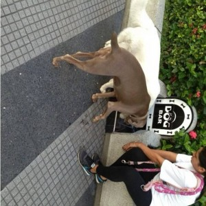 El Dog Bar es otro de los servicios que ofrece el Centro Comercial Cañaveral para que las mascotas se hidraten. - Suministrada /GENTE DE CAÑAVERAL