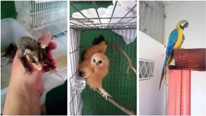 La campaña se desarrollará a nivel nacional con el fin de regresar a los animales a su hábitat.  - /GENTE DE CAÑAVERAL