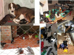 Loa animales abandonados reciben atención en la gatera Doña Felisa, próxima a ser desalojada.   - Suministrada/GENTE DE CAÑAVERAL