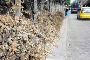 Las ramas secas obstruyen el paso peatonal cerca al sector E1 de El Bosque.  - Didier Niño/GENTE DE CAÑAVERAL
