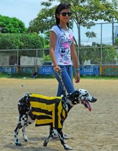 Las mascotas deberán presentarse con disfraz en el polideporitvo de Molinos Bajos.  - Archivo /GENTE DE CAÑAVERAL