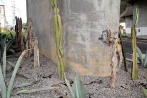 Los cactus reflejan la falta de atención de los jardines. - Javier Gutiérrez /GENTE DE CAÑAVERAL