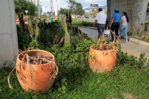 Las plantas que están debajo del intercambiador se están muriendo.  - Javier Gutiérrez /GENTE DE CAÑAVERALL