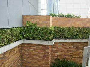 Voces oficiales explican que los jardines reciben un método de nebulización en frío utilizando insecticida. - Internet/GENTE DE CAÑAVERAL