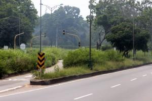 Los altos matorrales dificultan la visibilidad de los conductores, en el retorno de 'Plata Cero'.  - Fabián Hernández /GENTE CAÑAVERAL