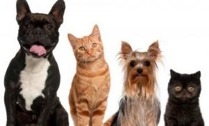 Los perros y los gatos deben ser vigilados por sus amos, quienes son los responsables de su cuidado y protección.  - Tomada de Internet/GENTE DE CAÑAVERAL