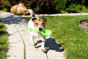Los dueños de las mascotas buscan otras opciones para recoger las heces de sus mascotas y no perjudicar el medio ambiente.  - Banco de Imágenes /GENTE DE CAÑAVERAL