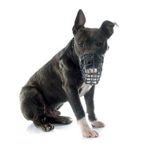Los perros deben ser sacados a la calle con bozal y correa.  - Banco de Imágenes /GENTE DE CAÑAVERAL