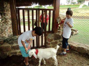 En el Club Acuarela, los pequeños también podrán disfrutar de atracciones como la granja.  - Suministrada/GENTE DE CAÑAVERAL