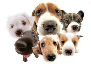 Los propietarios deben ser responsables con sus mascotas y cumplir las normas.  - Internet/GENTE DE CAÑAVERAL