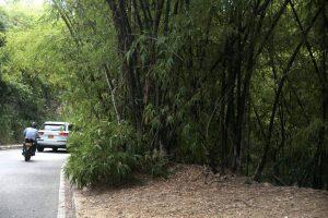 Los espesos matorrales impiden el libre tránsito de los peatones.  - Javier Gutiérrez /GENTE DE CAÑAVERAL