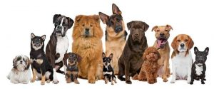 Para evitar problemas futuros, residentes de Cañaveral hablaron sobre la tenencia de mascotas, derechos y deberes.  - Internet /GENTE DE CAÑAVERAL