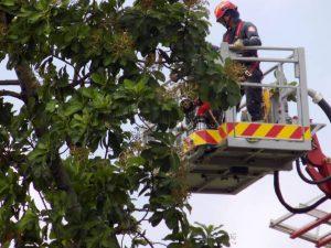 El lector denuncia la tala indiscriminada de árboles en la institución educativa.  - Suministrada/ GENTE DE CAÑAVERAL