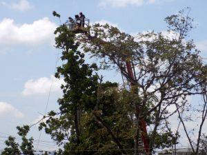 La institución informó que contó con el permiso de las autoridades ambientales, en pro de la seguridad de los niños. - Suministrada/ GENTE DE CABECERA