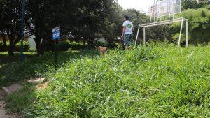 Los residentes de la zona piden a las autoridades que se ejerza más vigilancia y se ejecute la poda periódicamente.  - Fabián Hernández/GENTE DE CAÑAVERAL