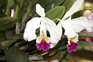 La exposición de orquídeas se llevará a cabo en el Jardín Botánico.  - Archivo/GENTE DE CAÑAVERAL
