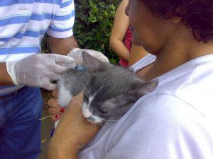 57 mascotas vacunadas y 7 adoptadas es el saldo de la jornada.  - Archivo/GENTE DE CAÑAVERAL