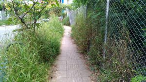 Los altos matorrales reflejan el abandono de la zona peatonal  del sector.  - Suministrada/GENTE DE CAÑAVERAL