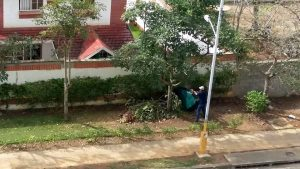 El residente denuncia que el jardinero deja los residuos de poda por fuera del conjunto, lo que genera malestar entre los vecinos.  - Suministrada/GENTE DE CAÑAVERAL