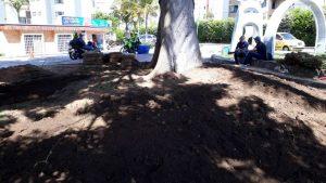 Se están sembrando nuevas plantas con el fin de mejorar la zona verde del parque Las Llaves.  - Suministrada/GENTE DE CAÑAVERAL