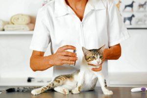 Los especialistas recuerdan que no se debe automedicar a la mascota, esto podría ser riesgoso para su salud. - Banco de imágenes/GENTE DE CAÑAVERAL
