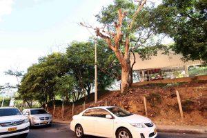 Los residentes de la zona hacen un llamado a las autoridades para que se retire el tronco y se prevengan posibles accidentes.  - Élver Rodríguez /GENTE DE CAÑAVERAL