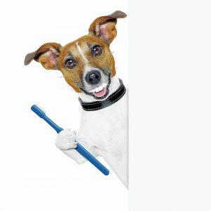 La salud dental es una parte importante del bienestar general de los animales.   - Banco de Imagenes/GENTE DE CAÑAVERAL