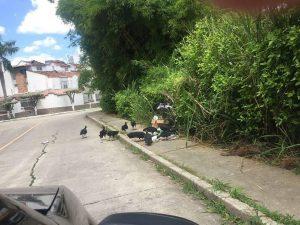 Los dueños de las mascotas dejan las bolsas con las heces fecales tiradas en la calle, y esto sumado a los desperdicios que hay en la zona, atrae los chulos. - Suministrada/GENTE DE CAÑAVERAL