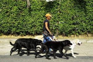 Los paseadores de perros deben estar comprometidos con el oficio y velar por el bienestar de  los animales.  - César Flórez/GENTE DE CAÑAVERAL
