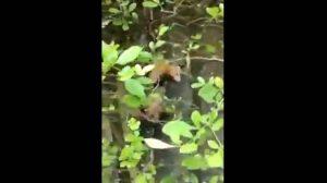 En las imágenes capturadas de un video se muestran los cuerpos de los animales muertos en los árboles y en el suelo.  - Foto tomada de Facebook/GENTE DE CAÑAVERAL