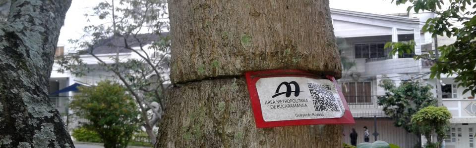 Piden retiro de guayas  de los árboles