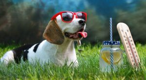 Al igual que el cuerpo humano, la mascota requiere de líquidos para contribuir con su sano desarrollo.  - Banco de Imágenes /GENTE DE CAÑAVERAL
