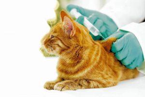 Los animales de compañía tienen hoy la oportunidad de vivir vidas más largas y saludables, en parte debido a la disponibilidad de vacunas que pueden proteger a las mascotas de enfermedades.  - Banco de imágenes/GENTE DE CAÑAVERAL