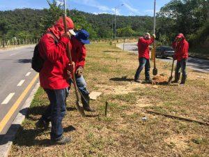 Los árboles contribuirán con el equilibrio ambiental de la zona y el embellecimiento del sector.  - Suministrada/GENTE DE CAÑAVERAL