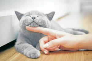 No todos los gatos están listos para que las personas los acaricien y los manipulen desde el primer momento. De hecho, algunos ni estarán listos para tener a nadie cerca. - Banco de imágenes/GENTE DE CAÑAVERAL