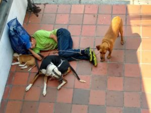 Los residentes esperan que las autoridades rescaten estos animales para que sean adoptados por personas que velen por su bienestar.   - Suministrada/GENTE DE CAÑAVERAL