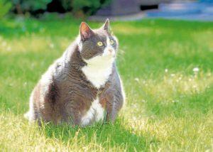 De acuerdo con los expertos, el sobrepeso se registra con más frecuencia en perros y gatos entre los 2 y 5 años de edad.  - Banco de Imágenes / GENTE DE CAÑAVERAL