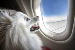 Antes de viajar con sus mascotas, es importante consultar con la embajada o consulado los requisitos  sanitarios exigidos por el país destino. - Banco de Imágenes /GENTE DE CAÑAVERAL