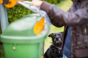 Los excrementos de las mascotas deben tener una adecuada disposición, con el fin de evitar enfermedades y malestares entre los vecinos. - Banco de Imágenes /GENTE DE CAÑAVERAL