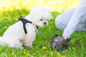 Las heces del perro se pulverizan y las personas terminamos respirando sus desechos, que pueden causar infecciones. - Banco de Imágenes /GENTE DE CAÑAVERAL