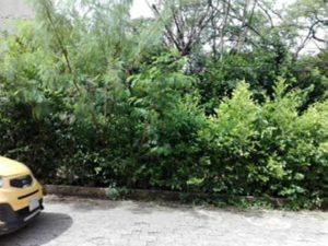 Debido al evidente deterioro, la comunidad hace un llamado a las autoridades para que realice la poda y la limpieza en la zona. - César Flórez /GENTE DE CAÑAVERAL