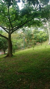 Las amplias zonas verdes son el principal atractivo del parque de Versalles. - Suministrada/GENTE DE CAÑAVERAL