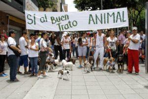 El plantón busca reunir a las cientos de personas que velan por la vida animal.  - Archivo/GENTE DE CAÑAVERAL