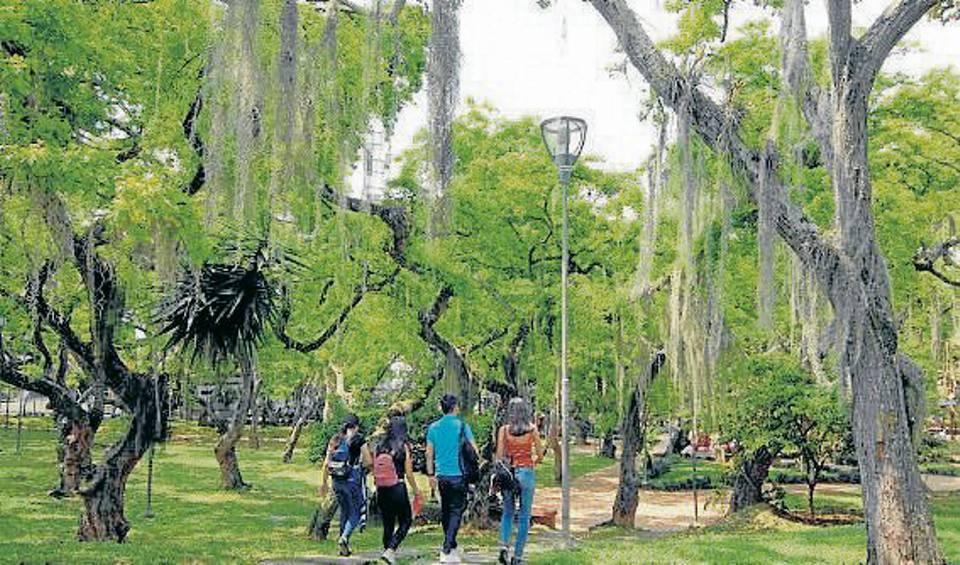 Los árboles elegidos se darán a conocer en las redes del AMB, después de cerrada la convocatoria. - Archivo / GENTE DE CAÑAVERAL