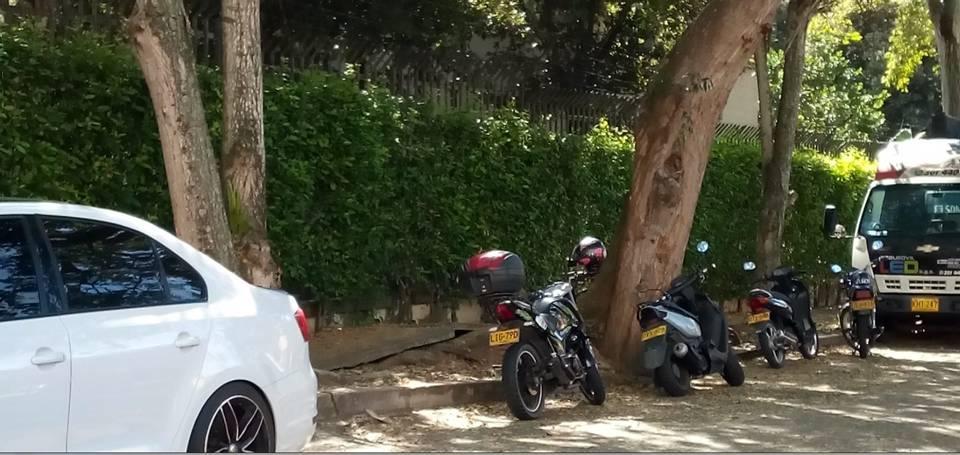 Los ciudadanos aseguran que las raices del árbol levantan poco a poco el pavimento, razón por la cual piden atención urgente. - Suministrada/GENTE DE CAÑAVERAL
