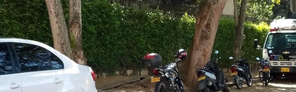 Árbol amenaza  con desprenderse