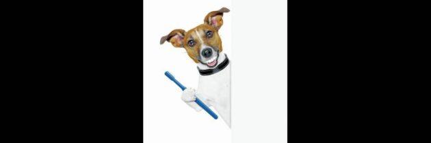 Cuide la salud dental  de su mascota