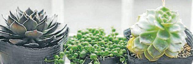 Cree su propio jardín  en un espacio reducido